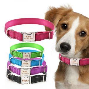 Curea personalizată pentru câini și căței