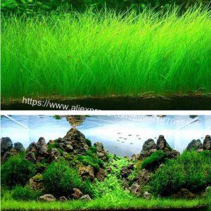 Cel mai bun gazon pentru acvariu